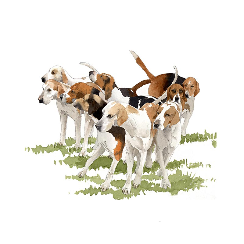 Hounds - Fernie Hunt, Leicestershire