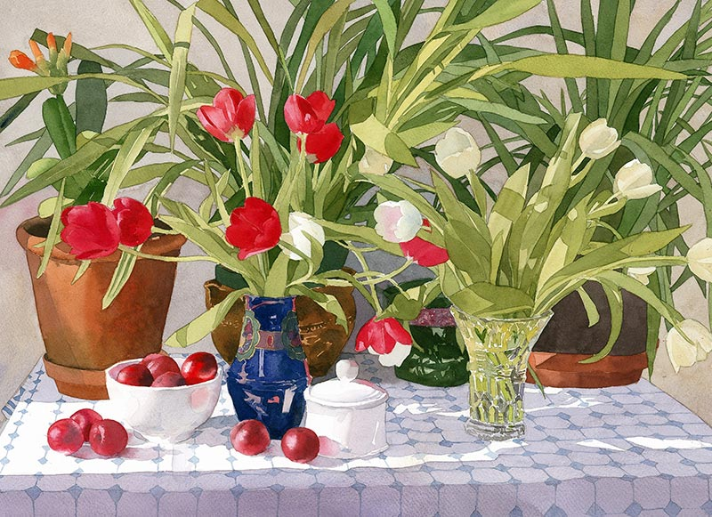 Still Life - With Red and White Tulips