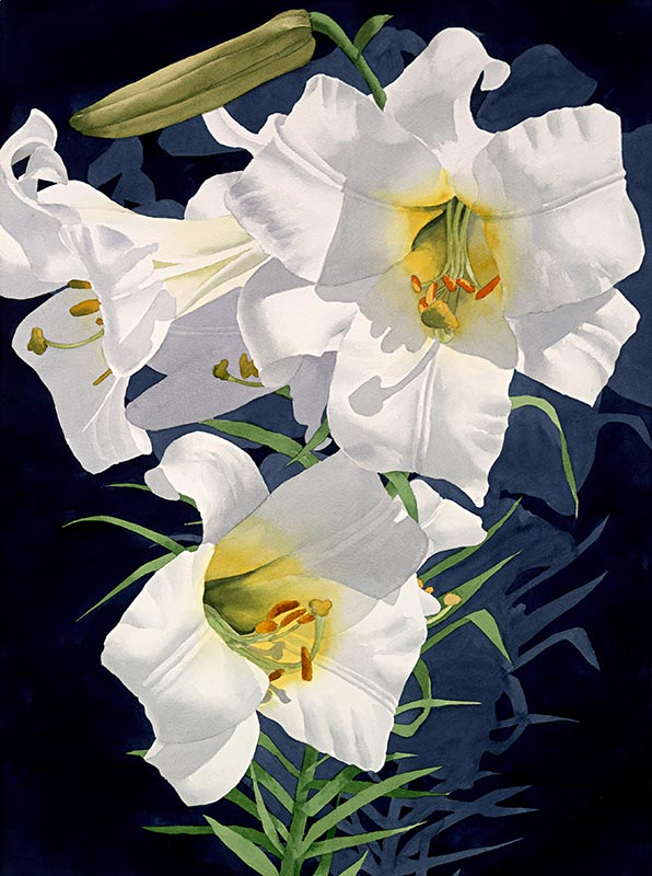 White Lily 3